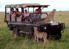 кения, сафари