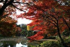 Парк Хибия, Токио